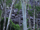 Picture of / about 'Black Trevethan Range' Queensland - Black Trevethan Range