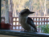 Picture relating to Kogan - titled 'Kogan Hotel Kookaburra'