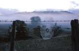 Picture relating to Werrikimbe National Park - titled 'Moorabark, Werrikimbe National Park'